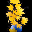 Yellow maple — Stock Photo #1772812