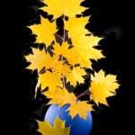Yellow maple — Stock Photo