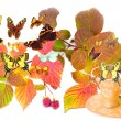 Leaves and cup with butterflies — Stock Photo