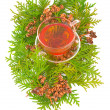 Thuja medicinal — Stock Photo