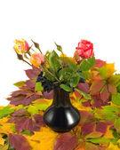Autumn roses — Stock Photo