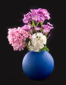 Mooie bloemen phloxes — Stockfoto
