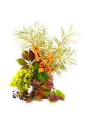 Medicinal buckthorn berries — Stock Photo