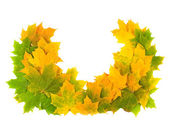 Wreath from maple leaves — Stock Photo