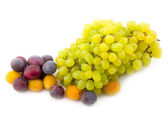 Yellow plum and prunes with grapes — Stock Photo