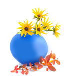 Camomiles in blue vase — Stock Photo