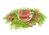 Medicinal coniferous plant — Stock Photo
