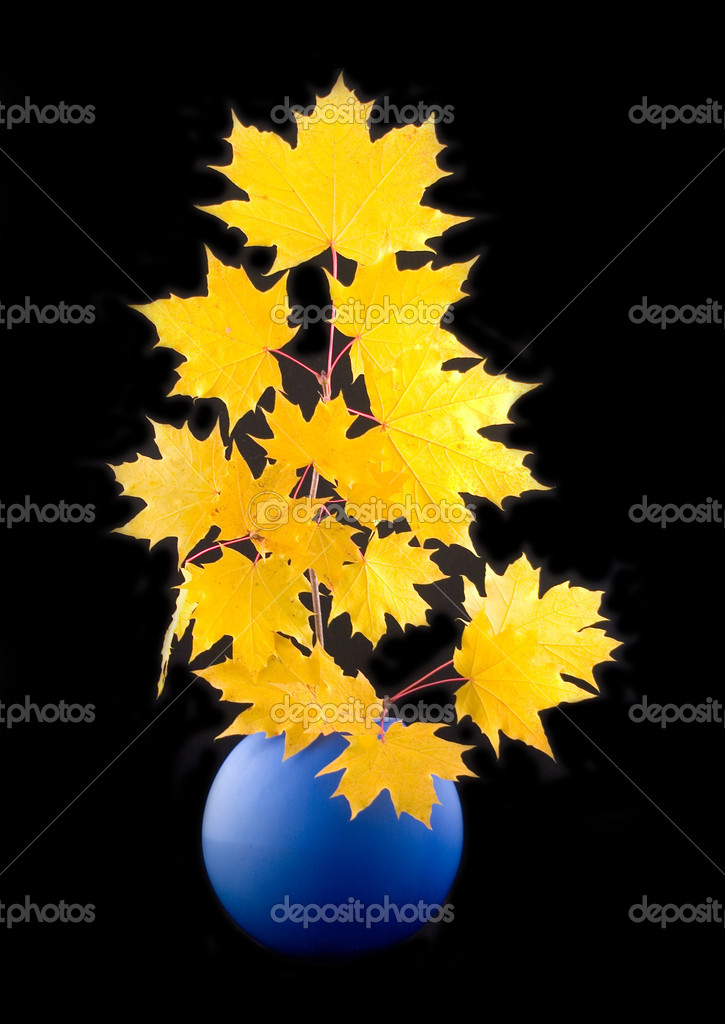 Yellow maple autumn beautiful leaves with branch in blue ceramic vase on black background — Stock Photo #1771128