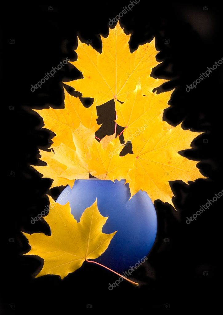 Yellow maple autumn beautiful leaves with branch in blue ceramic vase on black background  Stock Photo #1771448
