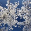 Winter trees — Stockfoto