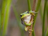 小青蛙 — 图库照片