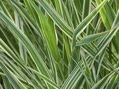Colourful Grass — Stock Photo