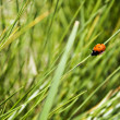 Lady bird — Stock Photo #2105017