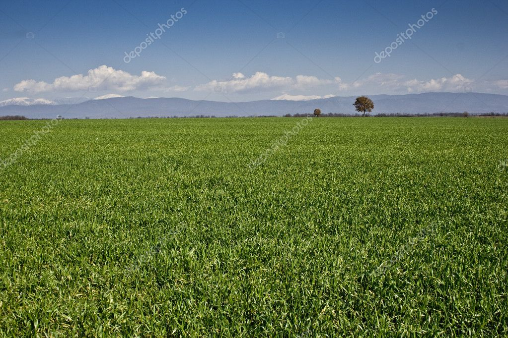 Landscape - green field — Stock Photo #2533464