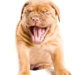 Постер, плакат: Nice Puppy Smile