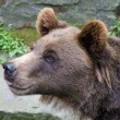 Stock Photo: Bear