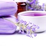 Lavender plant — Stock Photo #1806769