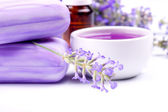 Lavender plant — Stock Photo