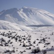 Snowy mountains — Stock Photo #2066412
