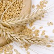 Wheat — Stock Photo #2067922
