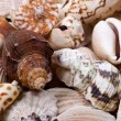 Stock Photo: Shellfish shells