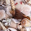 Stock Photo: Shellfish background