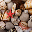 Stock Photo: Starfish and shells