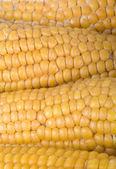Biologische geteelde maïs textuur — Stockfoto