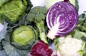 Cabbage assortment — Stock Photo