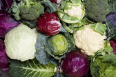 All sorts of cabbage — Stock Photo