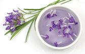 Lavendel blomma och extrakt — Stockfoto