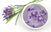 Lavender flower and extract — Stock Photo