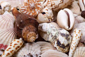 Shellfish shells — Stock Photo