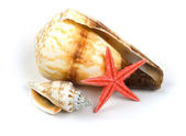 Shellfish on white background — Stock Photo