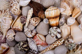 Shellfish background — Stock Photo