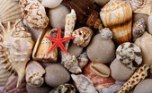 Starfish and shells — Stockfoto