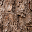 Bark — Stock Photo #1838087