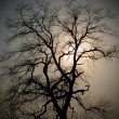 Evening tree - Stock Photo