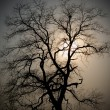 Stock Photo: Evening tree
