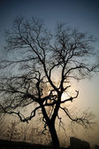 Evening tree — Stock Photo