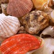 Seashells — Stock Photo #1770367