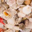 Seashells — Photo