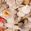 Seashells — Stock fotografie