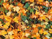 Konsistens av höstens löv — Stockfoto