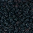Backgrounds of blackberries — Stock Photo