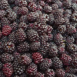 Stock Photo: Blackberry