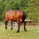 Horse — Stock Photo #1920172
