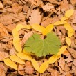 fall leaves — Stock Photo #2215388