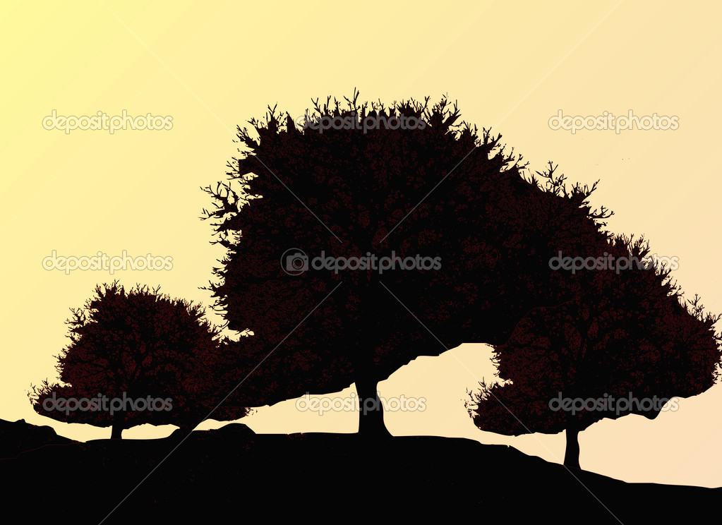 Silhouette of oak tree in autumn — Stok fotoğraf #2252834