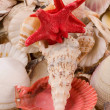 Seashells — Foto de Stock